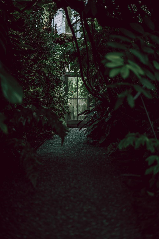 photo of green bush plant pathway