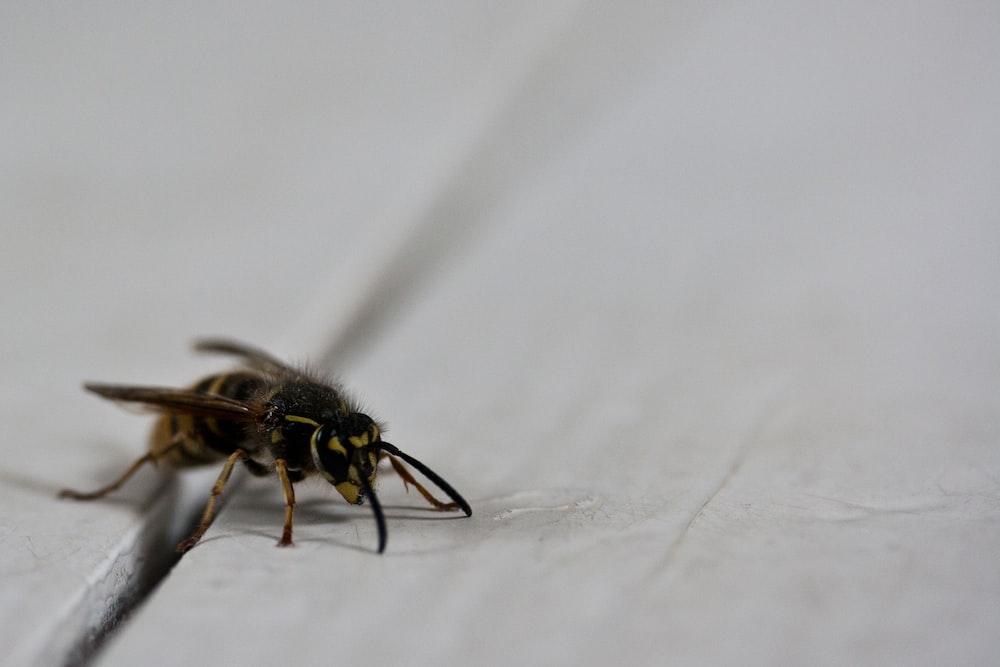 black and yellow bee macro photography