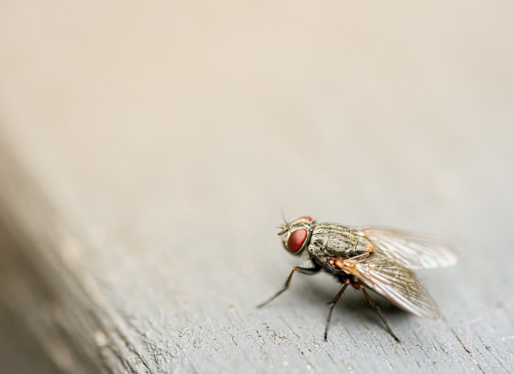 housefly on board