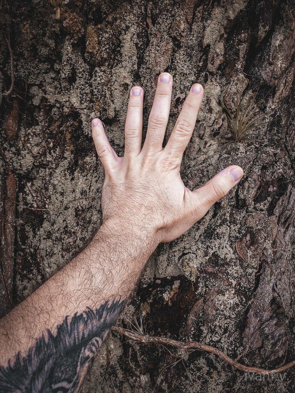 person touching brown tree