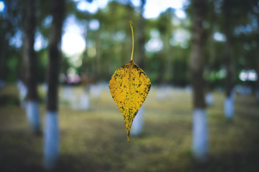 shallow focus photography of yellow leaf