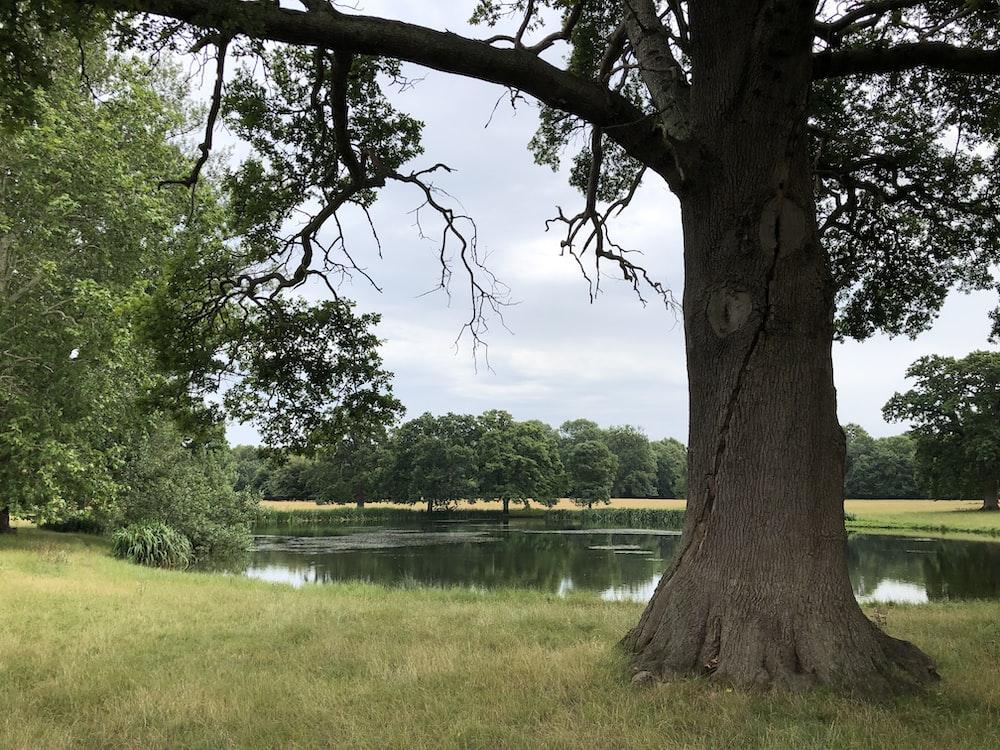 green-leafed tree near lake