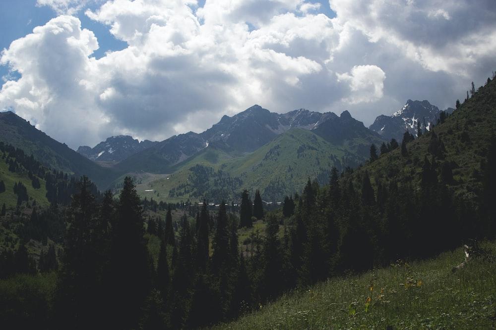 pine trees near mountains at daytime