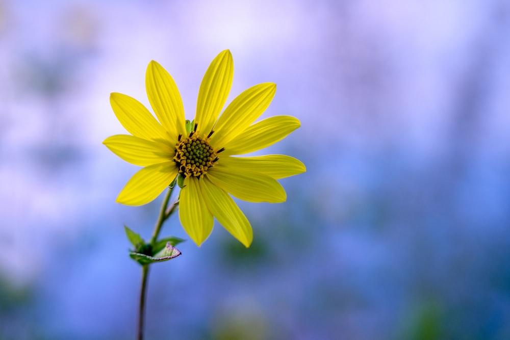 yellow-petaled flower during daytime