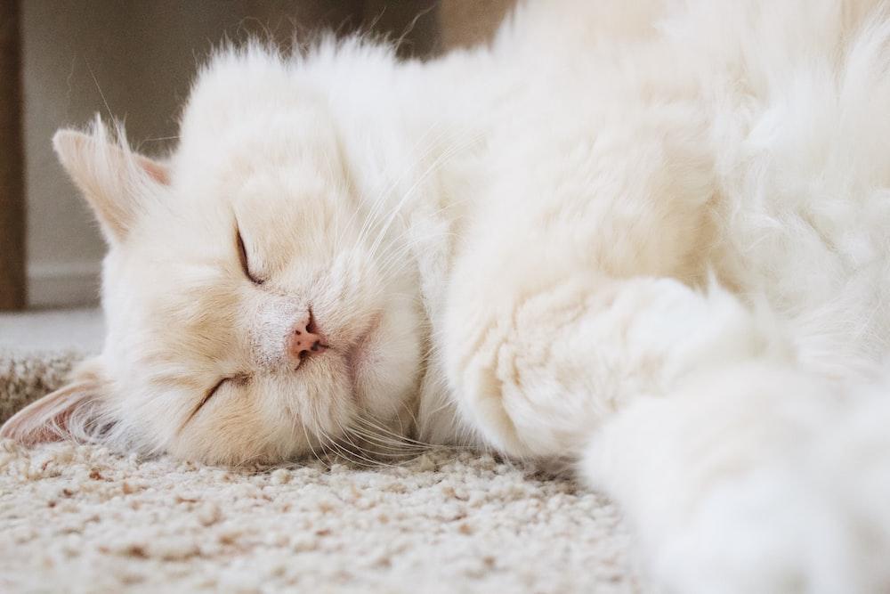 white cat lying on mat