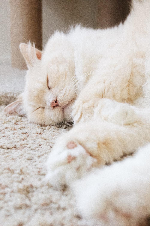 white cat on floor