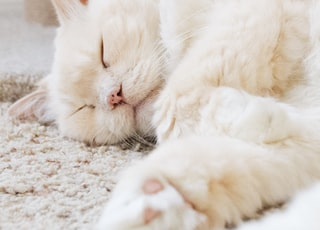 white cat on floor