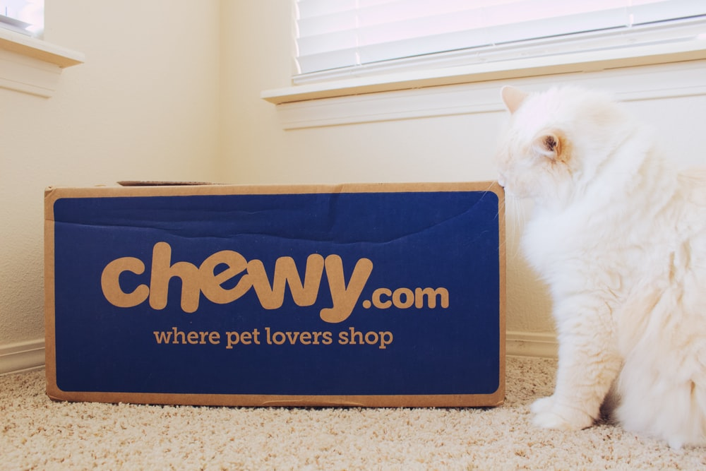 cat sitting beside box