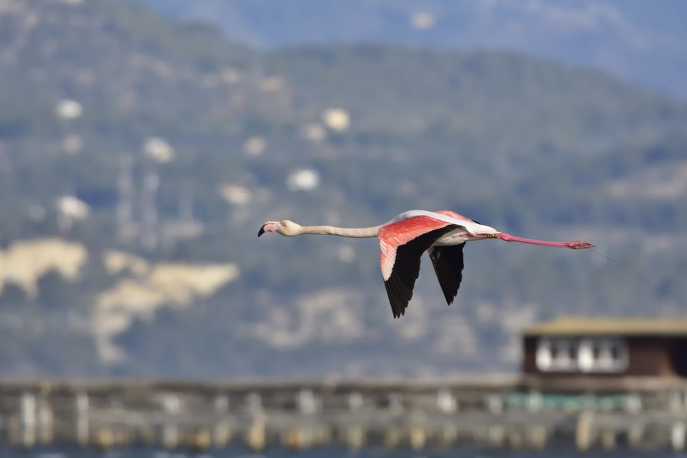 shallow focus photo of red and white bird flying
