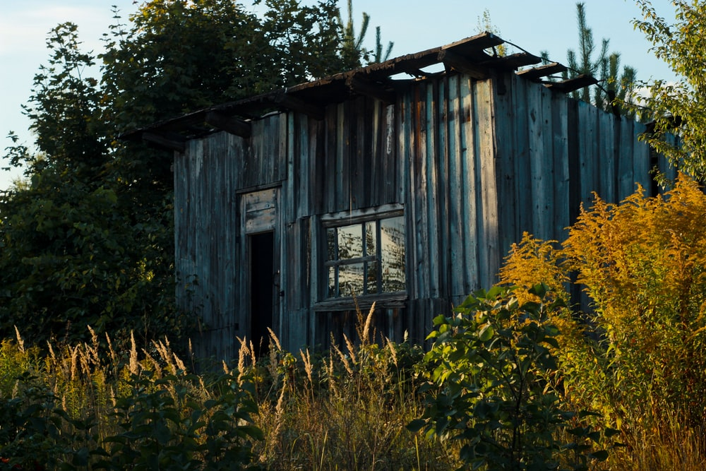 gray wooden shed between trees at daytime