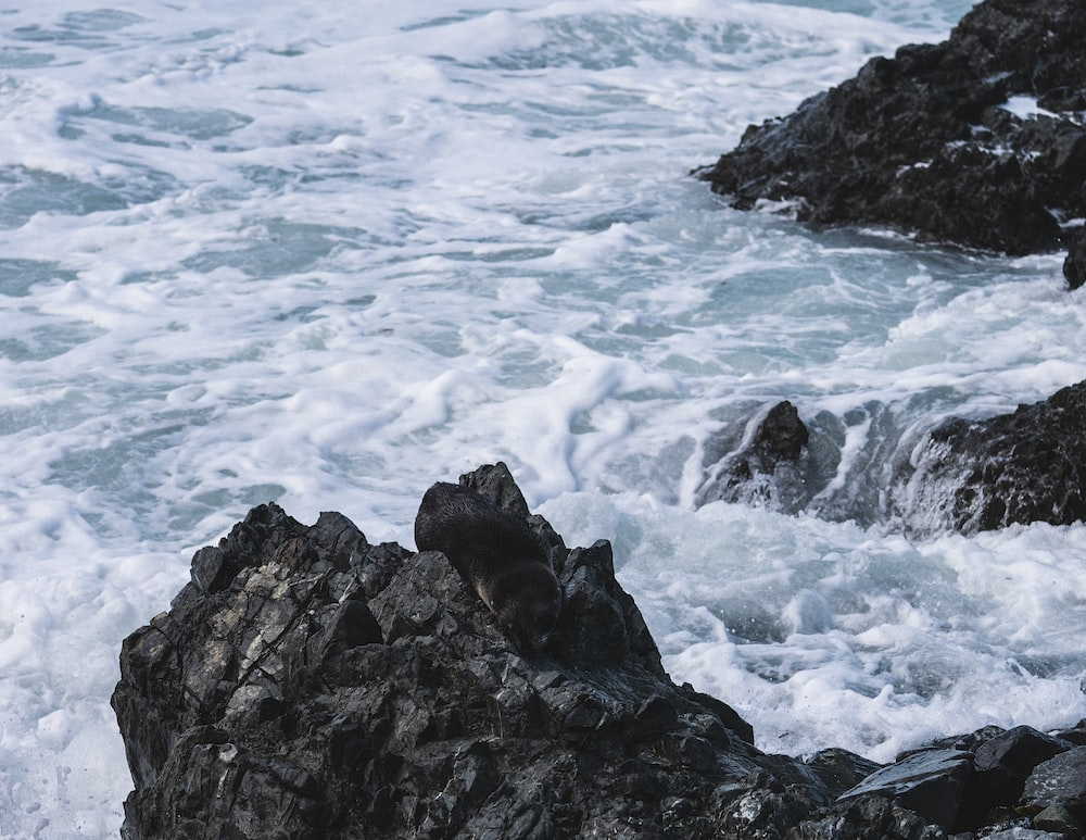 sea waves on rock formation at daytime
