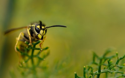 yellow bee perch on green plant