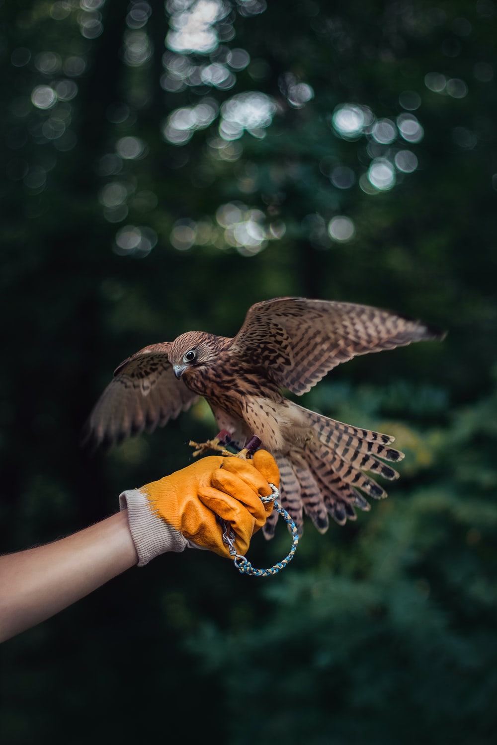 person holding brown eagle