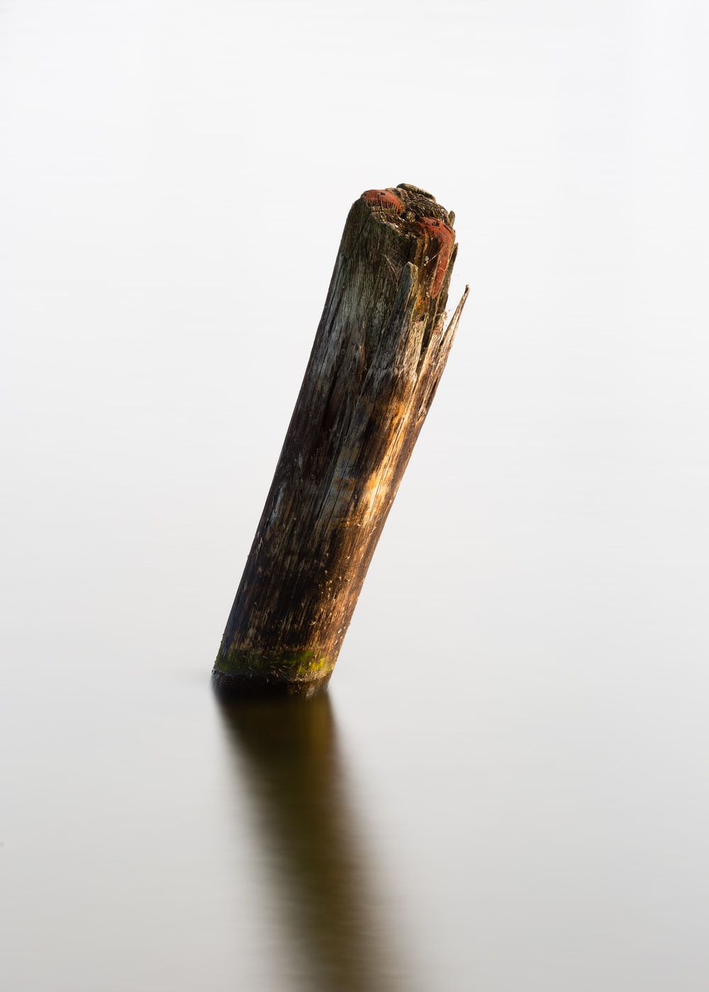 brown wooden stick in body of water