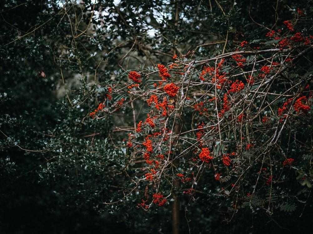 selective color of orange-petaled flower
