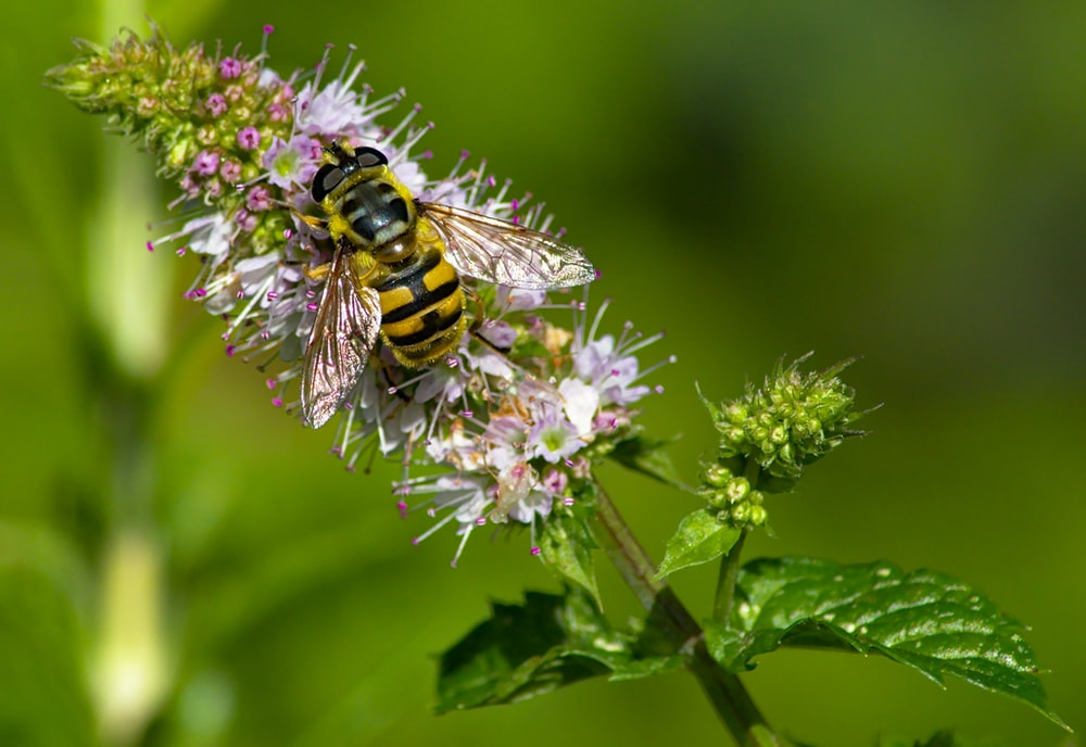 focus photography of yellow bee