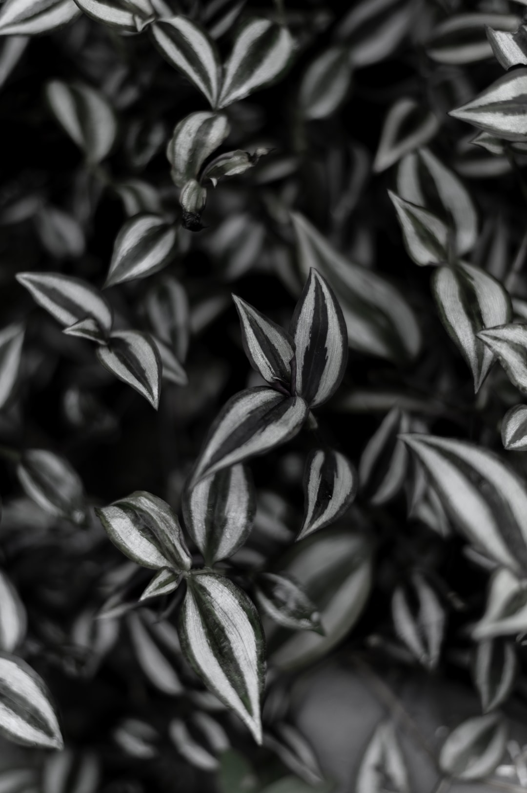Black and white pattern of leafs
