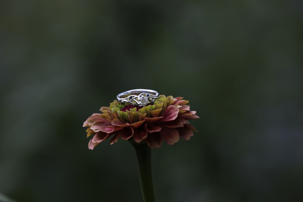 silver-color ring on pink petaled flower in close-up phoyo