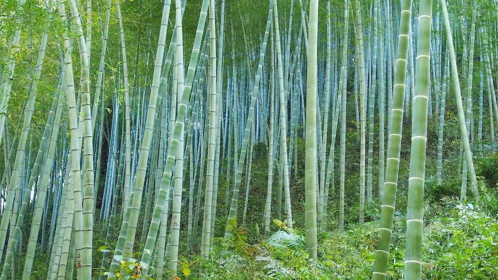 green bamboo grass