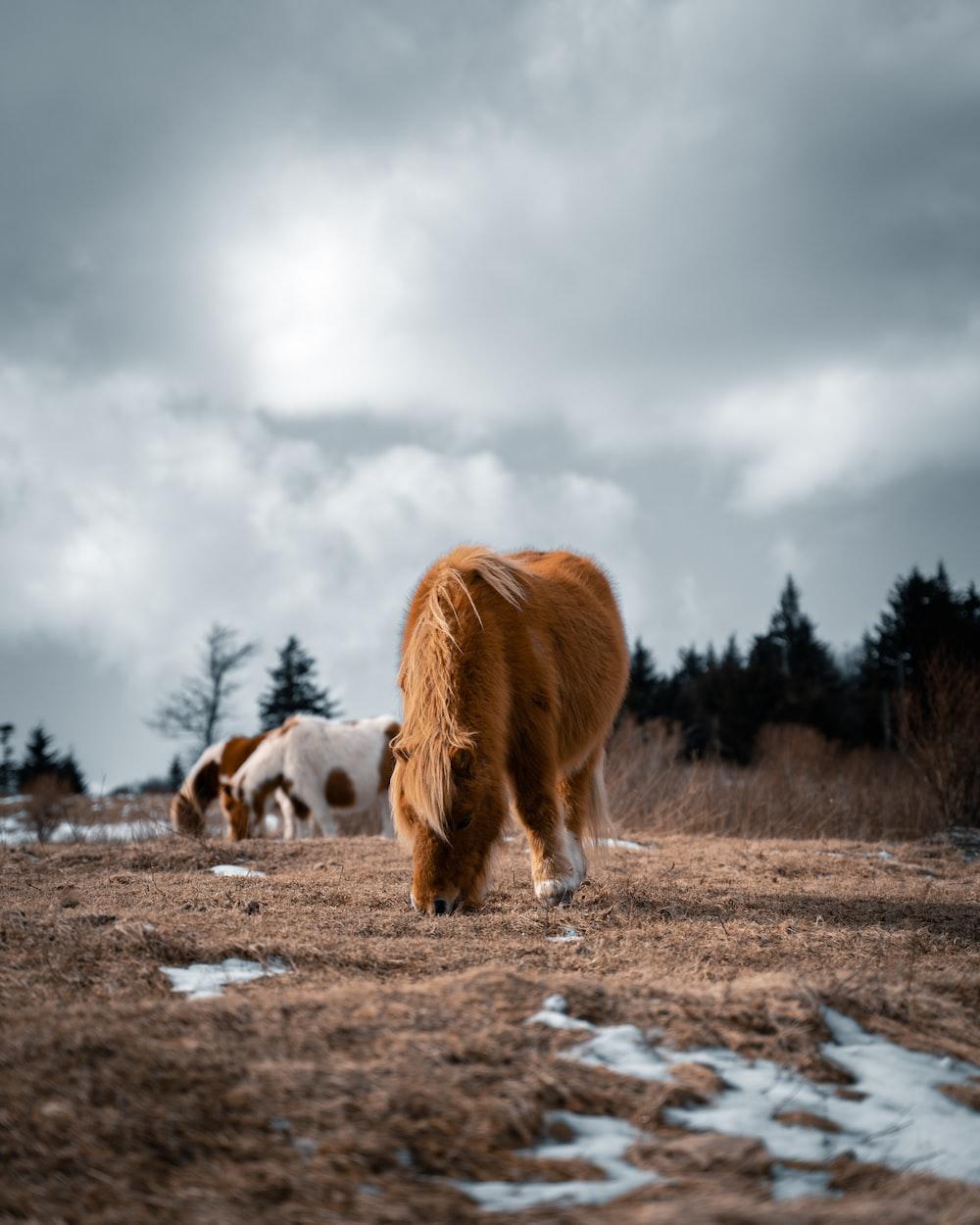 brown horse eats grass