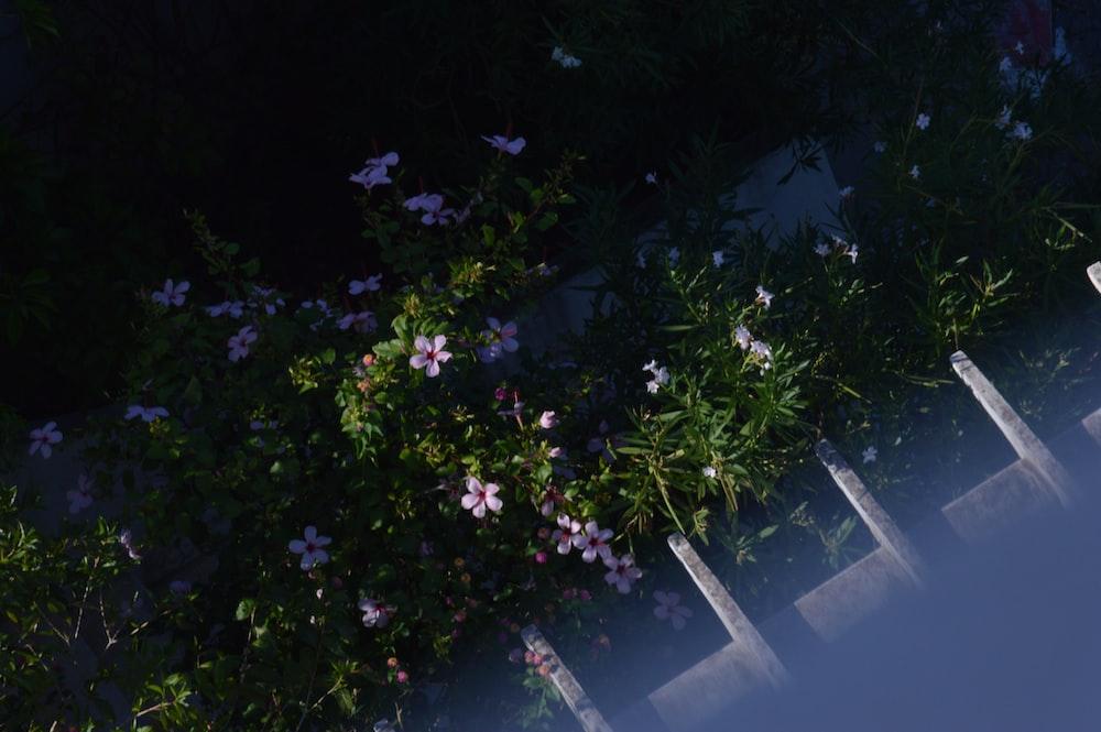 white-petaled flowers during daytime