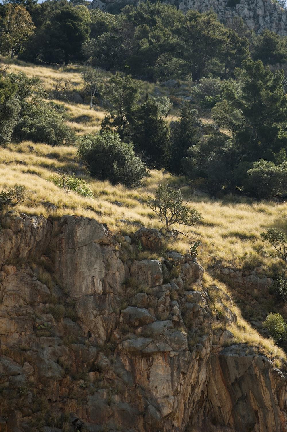 green trees over vliff