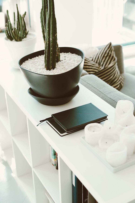 phone near cactus plant in bowl