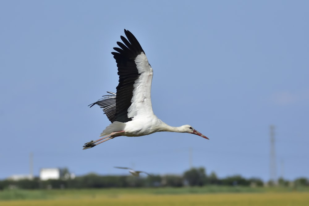 flying white and black bird during day
