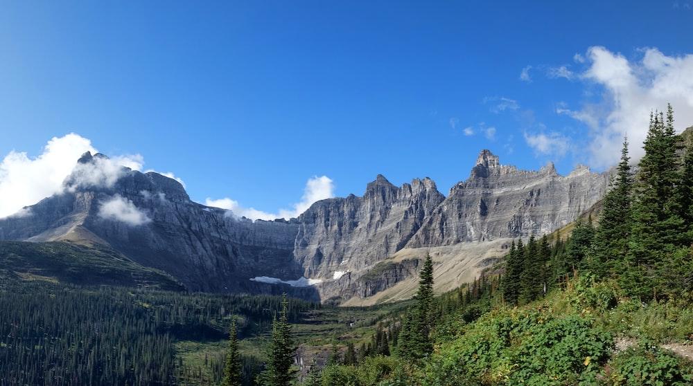gray mountains near pine trees at daytime