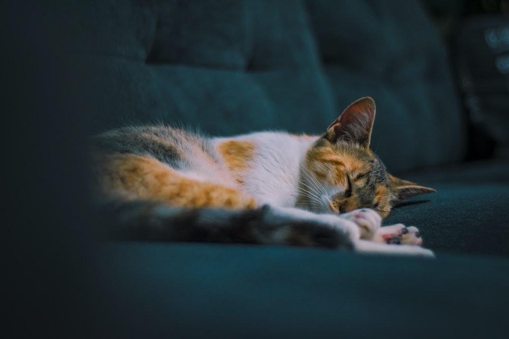 closeup photo of cat lying on sofa