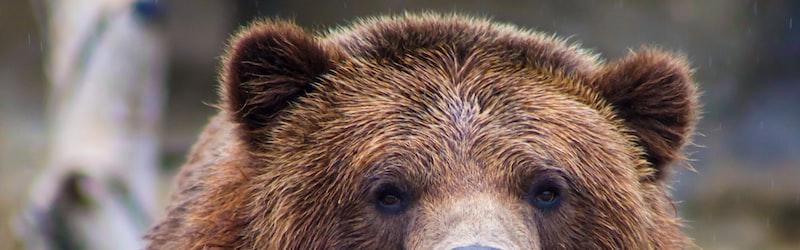 三毛別熊事件は日本史上最悪の獣害事件か?人食い熊の恐怖に迫る。