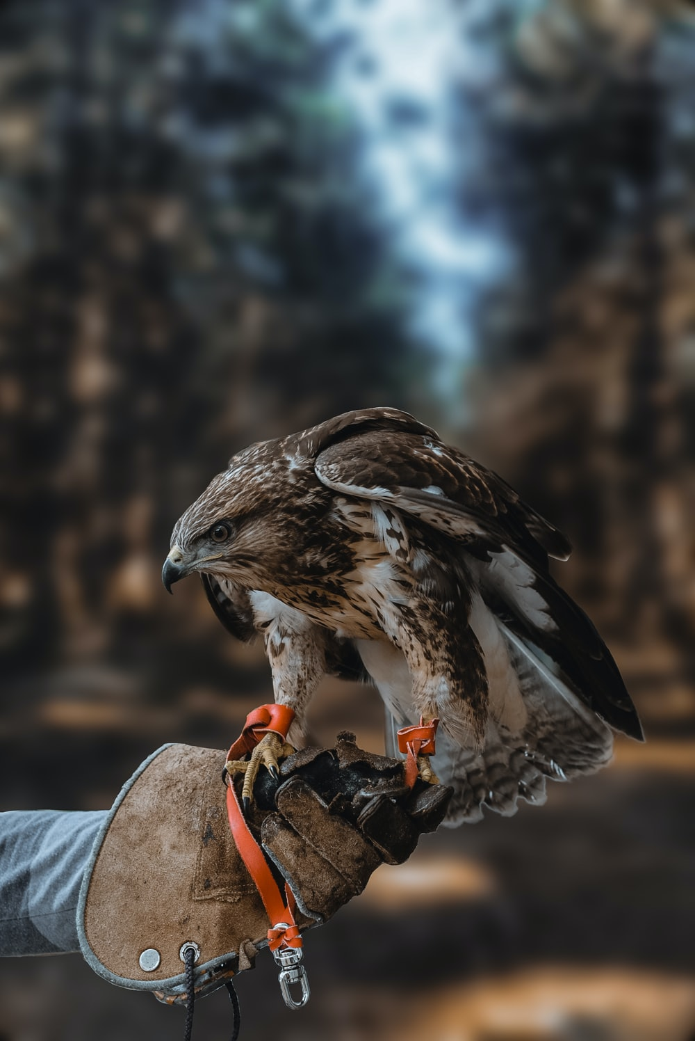 white and brown hawk on person's hand