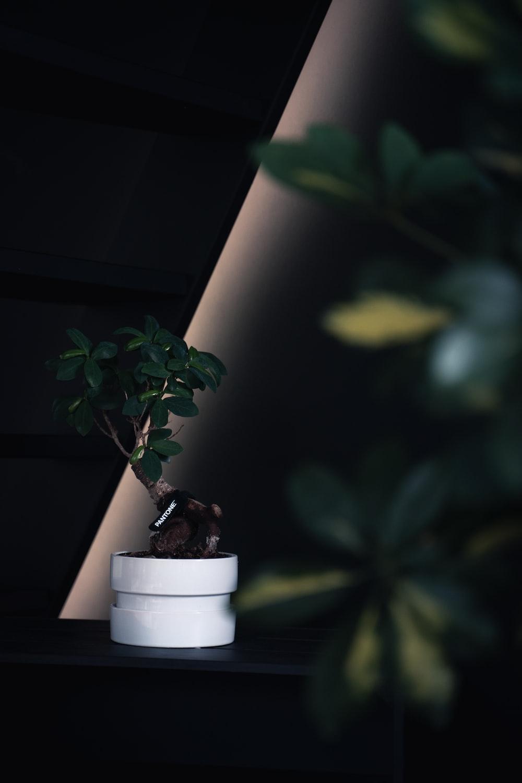 round white ceramic pot with green plant