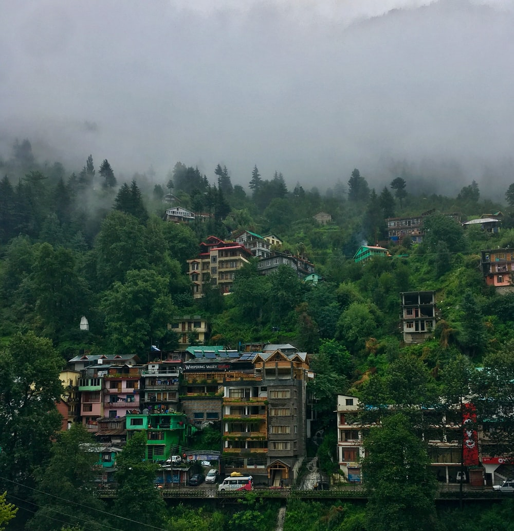 aerial photography of houses surrounded with tall and green trees covered with fogs