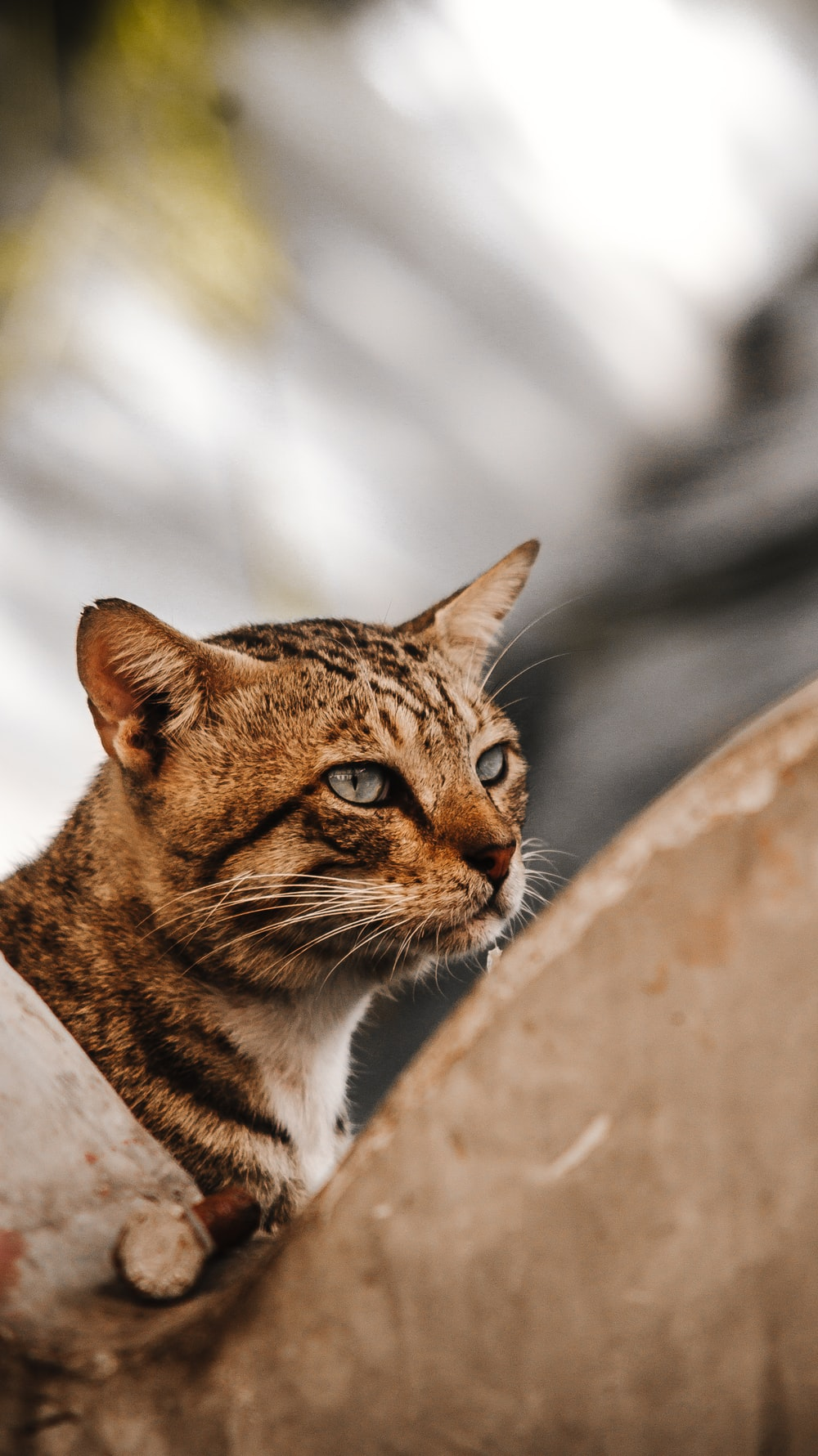 brown cat in close-up photo