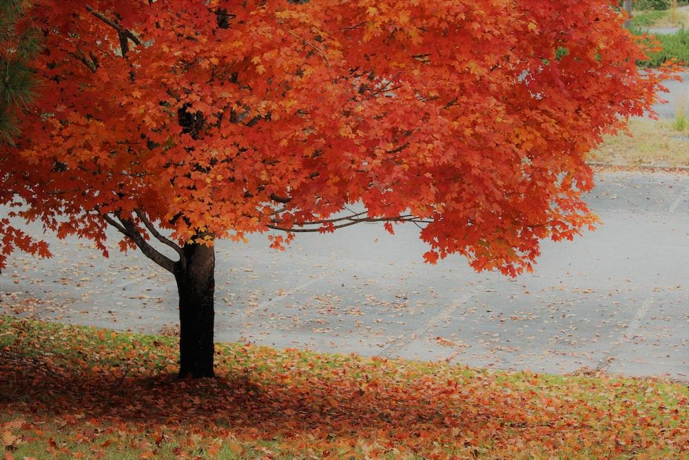 orange leafed tree at daytime