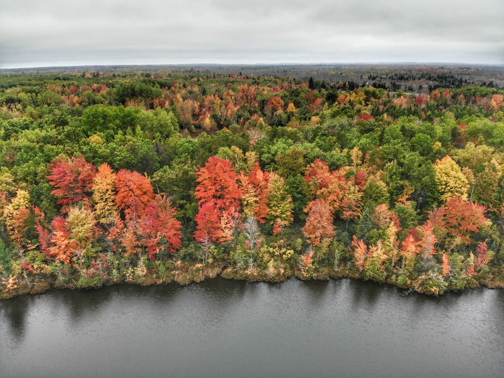 aerial photography of green and red trees during daytime