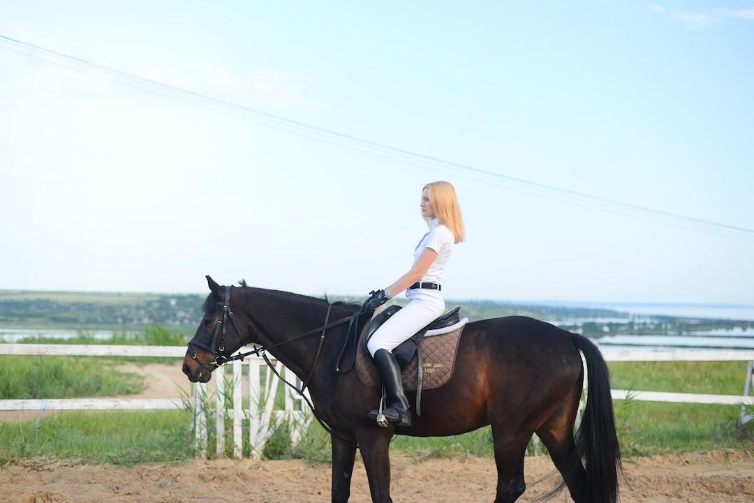 horses, equestrian