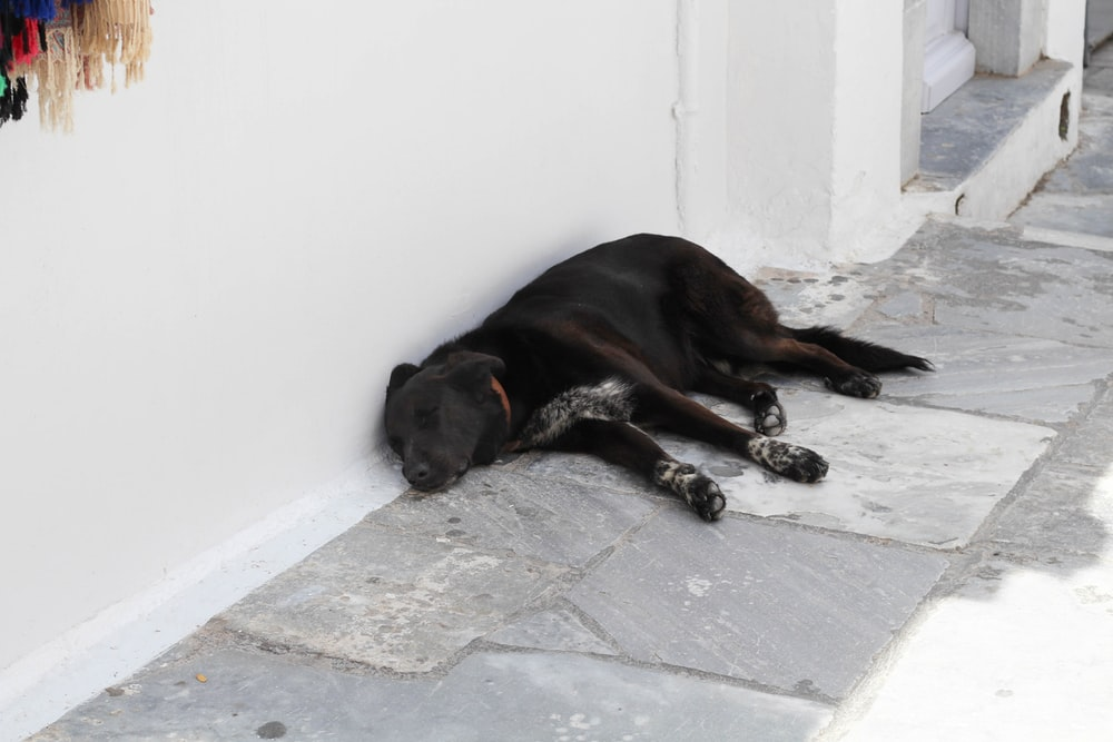 black dog beside wall