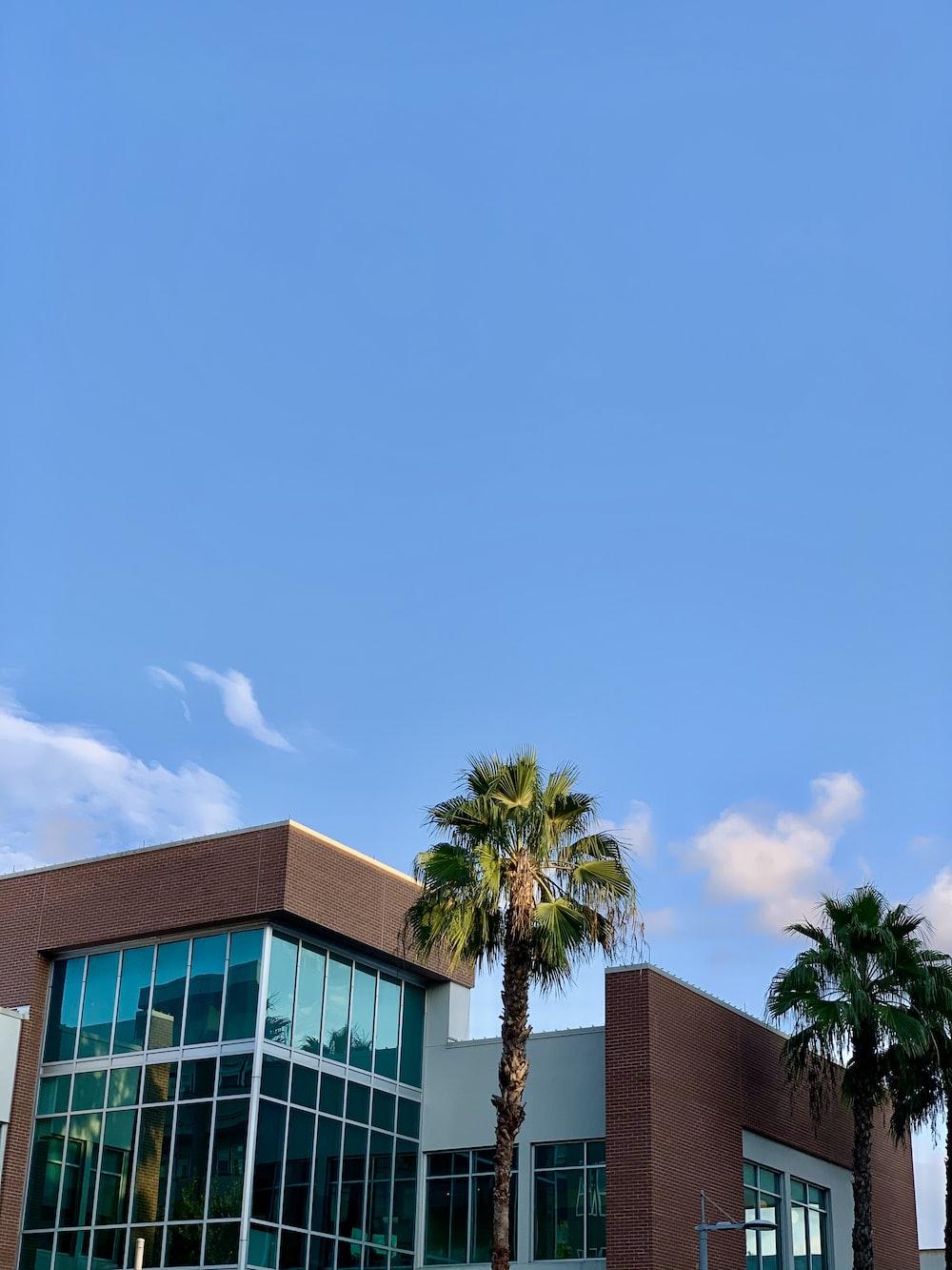 palm tree beside concrete building