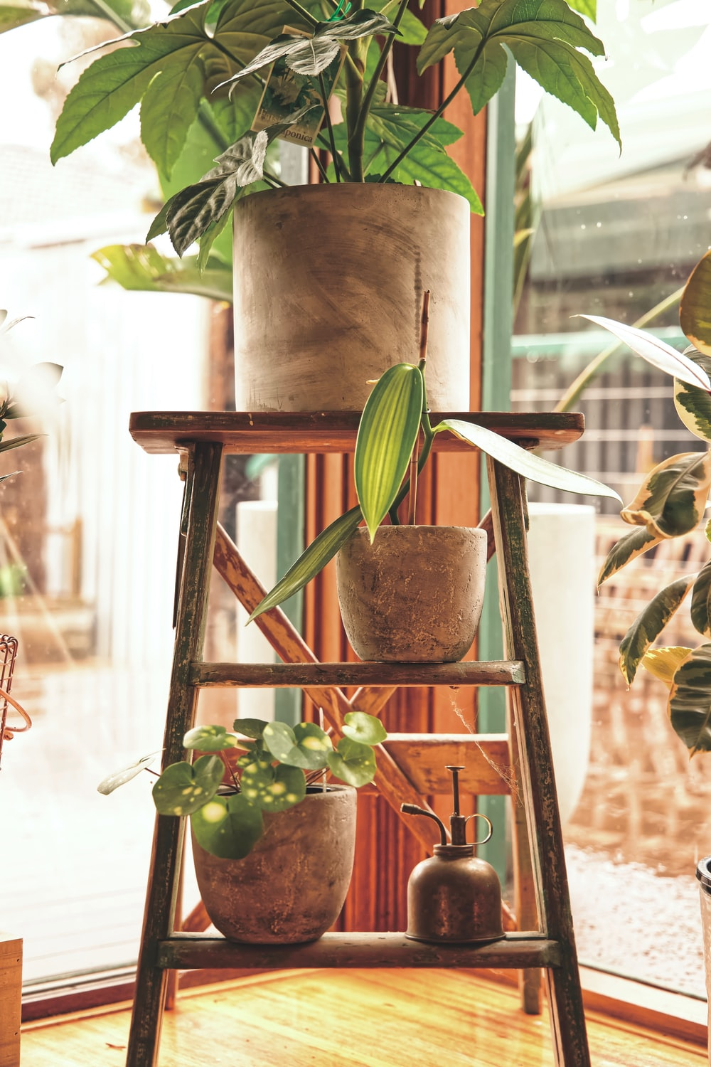 green-leafed plants in brown pots