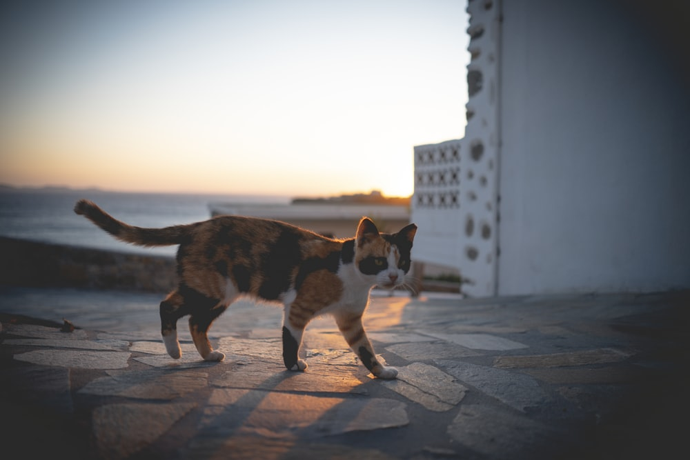 brown and white cat walking on gray concrete floor during daytime