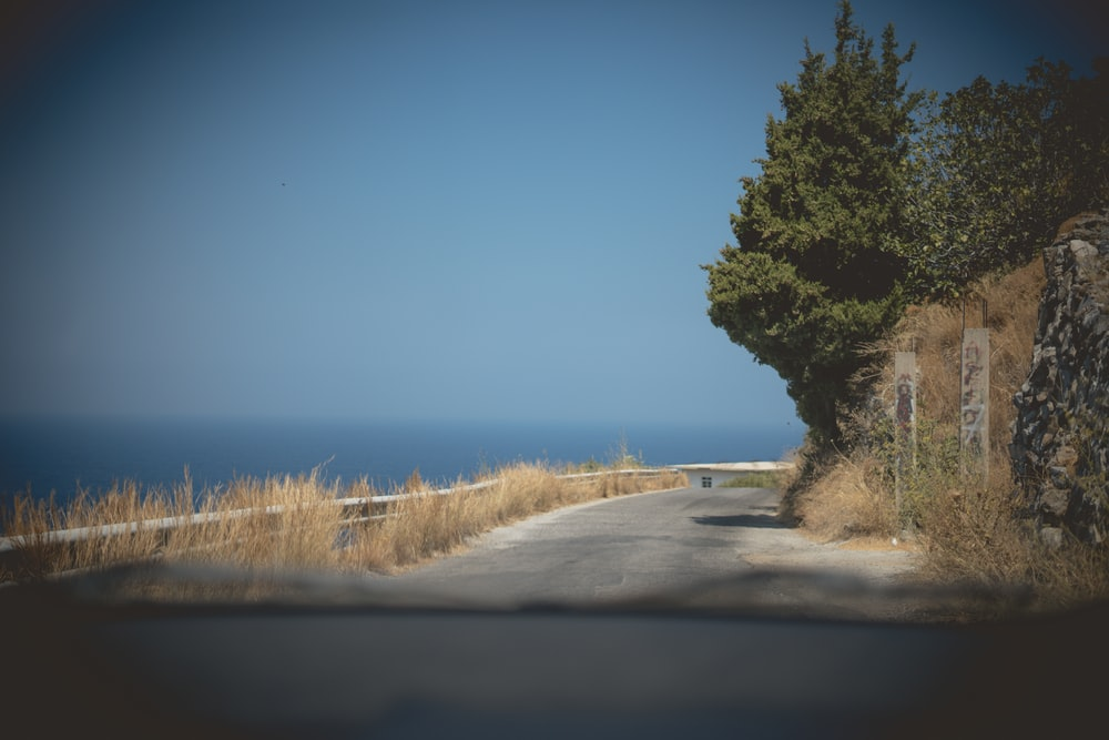 concrete road in between trees and sea water