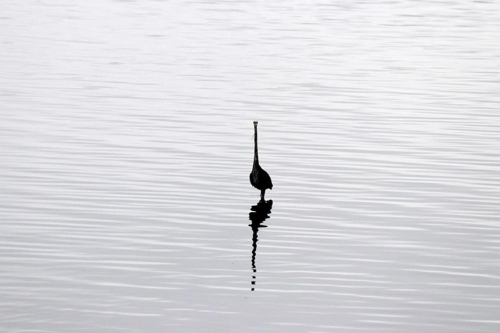 black bird on water