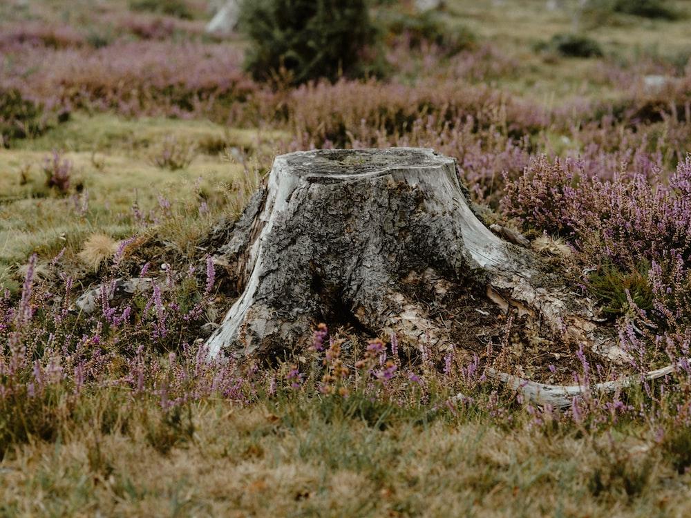 Tree Stump Pictures Free Images On Unsplash