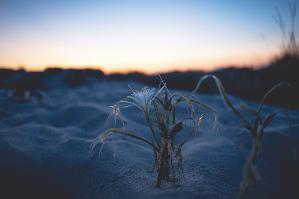 white plant on gray sand during sunset