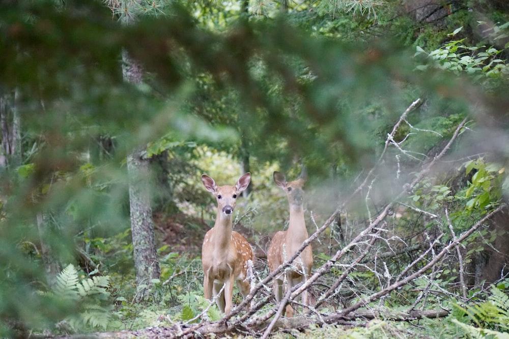 two deer standing beside tree at daytime