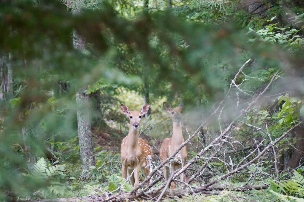 two deer standing beside tree at daytime