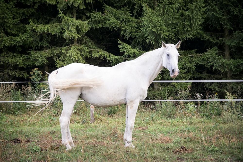 white horse standing near tree