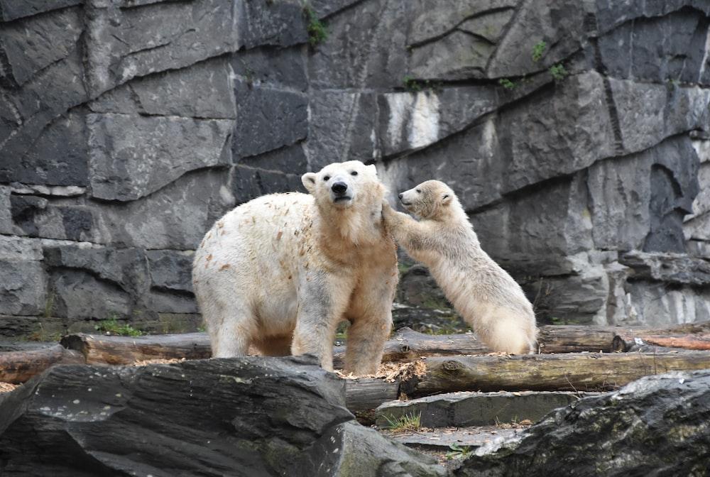 beige bears near rocks